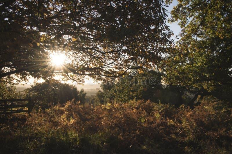 Wczesnego poranku słońce filtruje przez drzew zdjęcie stock