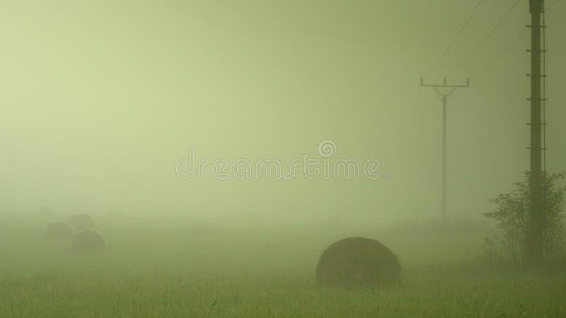 Wczesny mgłowy ranek przy łąkami. obrazy royalty free