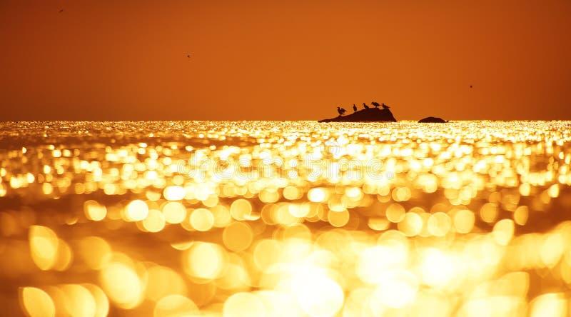 Wczesny poranek nad morzem i ptaki obrazy royalty free