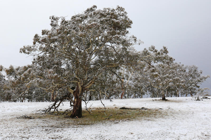 Wczesny sezonu opad śniegu obraz royalty free