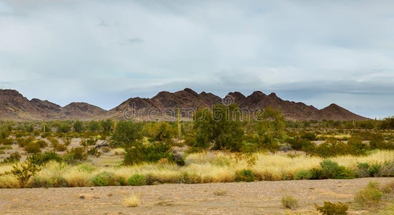 Wczesny Wieczór w Arizona pustyni kaktusie Tucson zdjęcia stock