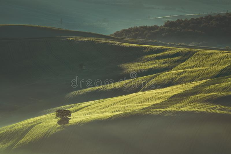Wczesny wiosna ranek na Tuscany wsi, Włochy zdjęcie stock
