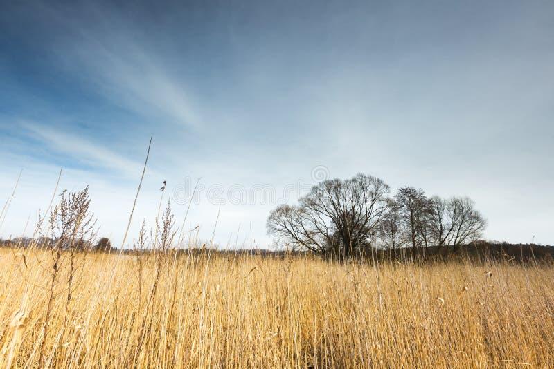 Wczesny wiosny jeziora krajobraz obrazy stock