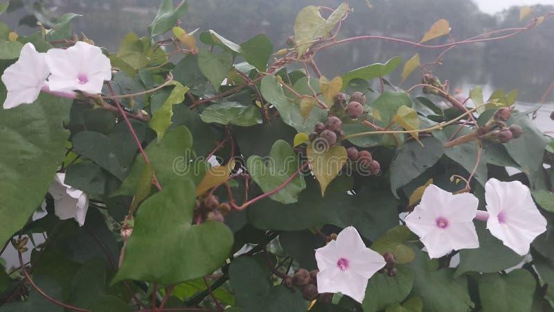 Wczesnych poranków różni kwiaty zdjęcia stock