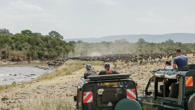 4wd车的游人观看角马集合在玛拉河 库存照片
