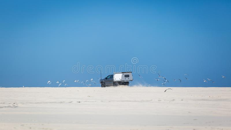 4wd στην παραλία που ενοχλεί seagulls στοκ εικόνες