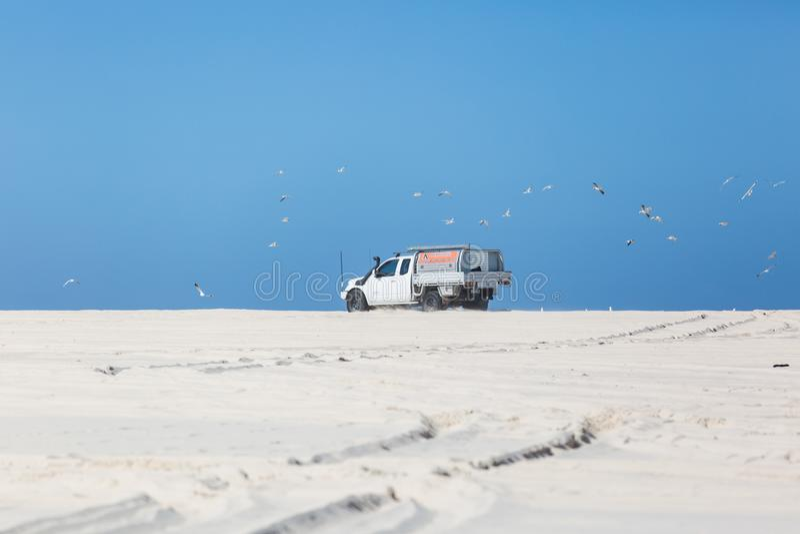 4wd στην παραλία που ενοχλεί seagulls στοκ φωτογραφίες