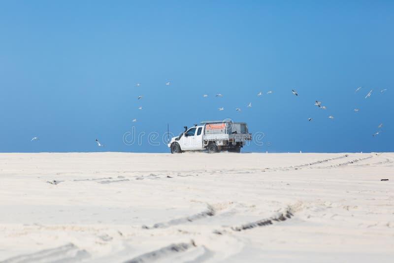 4wd на пляже нарушая чайок стоковые фото