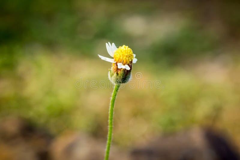 Weak Flower. In the big stock image