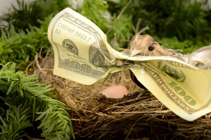 Wealthy Nest Egg. A bird holds a hundred dollar bill in its mouth while at the nest egg for several investment concepts, 401k, account, banking, banknote stock images