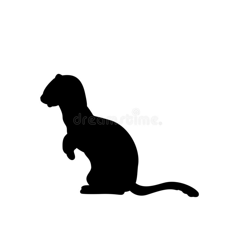 Free Weasel Ferret Silhouette. An Animal Of The Marten Family Stock Image - 163863801