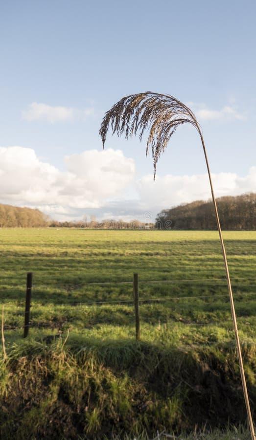 Weat gräs i fältet arkivbilder