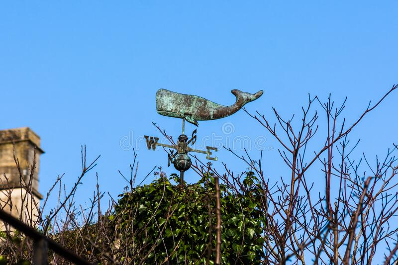 Whale weather vane. A weather vane in the shape of a sperm whale above an ivy covered roof in Bradford on Avon stock images