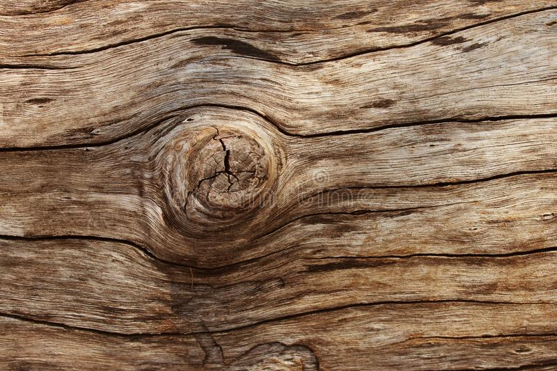 Weathered barn wood background with knots. brown old wood, sepia color. texture for background.  stock photos