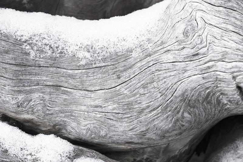 Weathered driftwood dusted with snow royalty free stock images