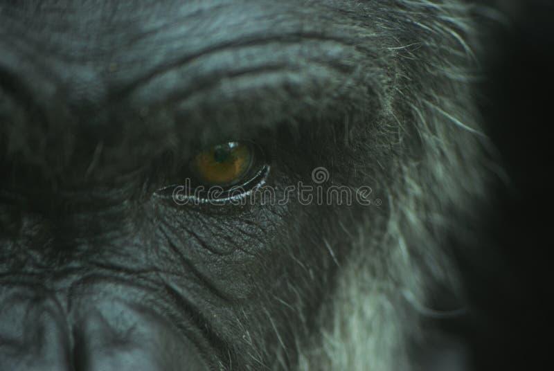 Weathered Eye stock photography