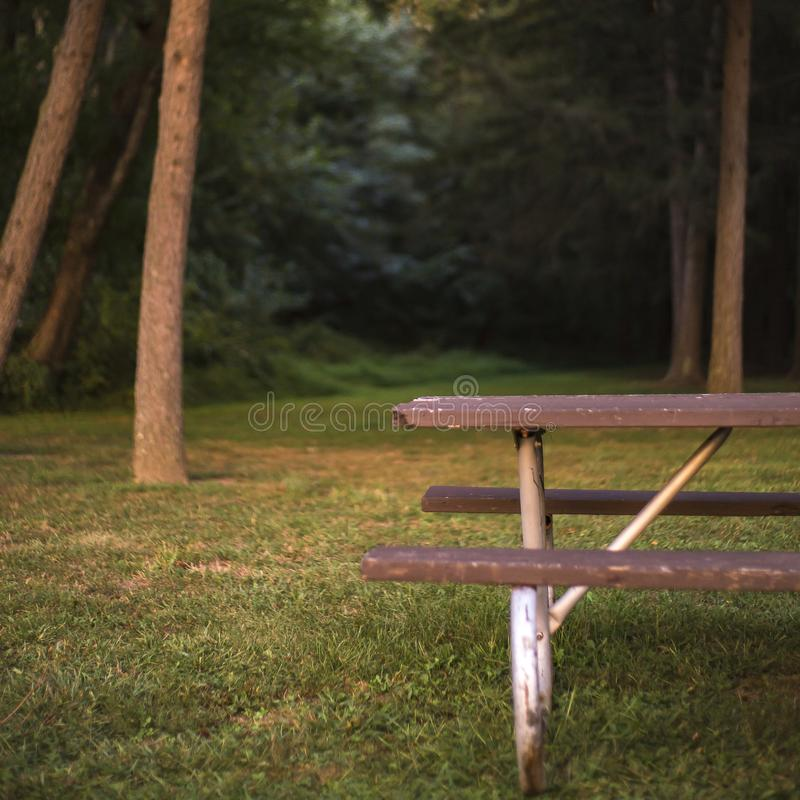 Weathered picnic table and bench by the forest. Old wooden picnic table and bench on a grassy ground. View of tall trees and thick foliage can be seen near the stock images