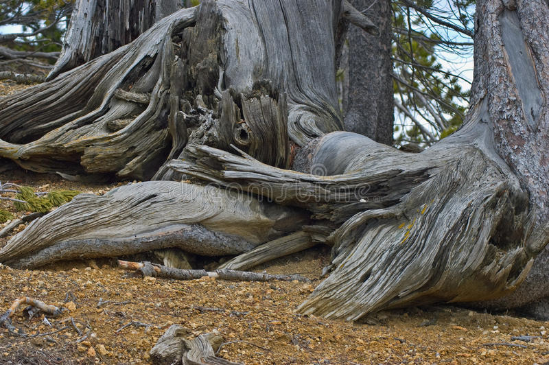 Download Weathered trees stock photo. Image of trees, weathering - 19745148
