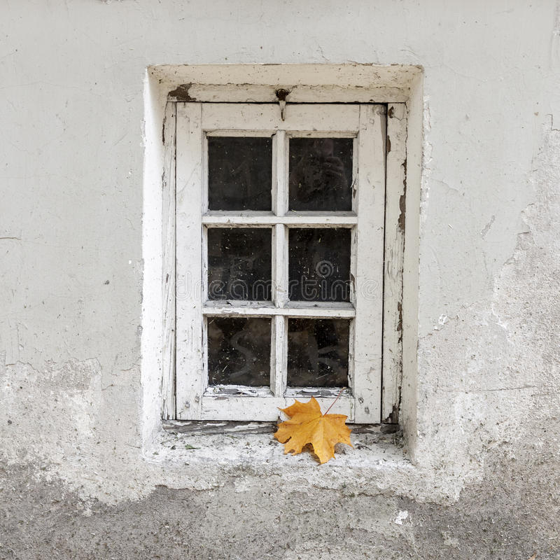 Weathered window with single maple leaf royalty free stock photography