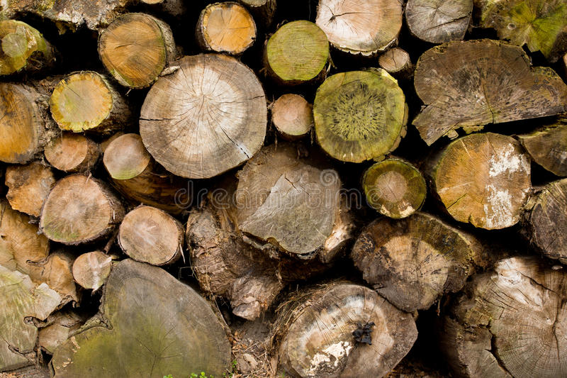 Download Weathered wood stock image. Image of pine, texture, weathered - 23690849