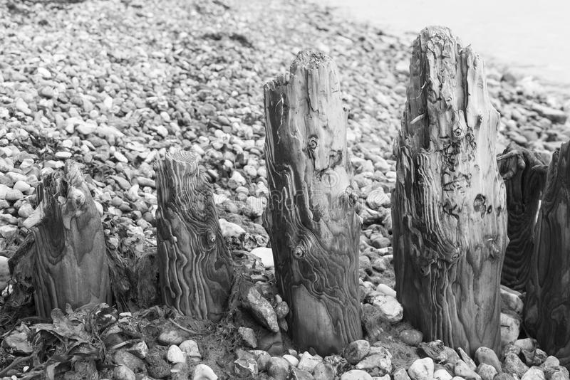 Weathered wooden groin at beach royalty free stock images