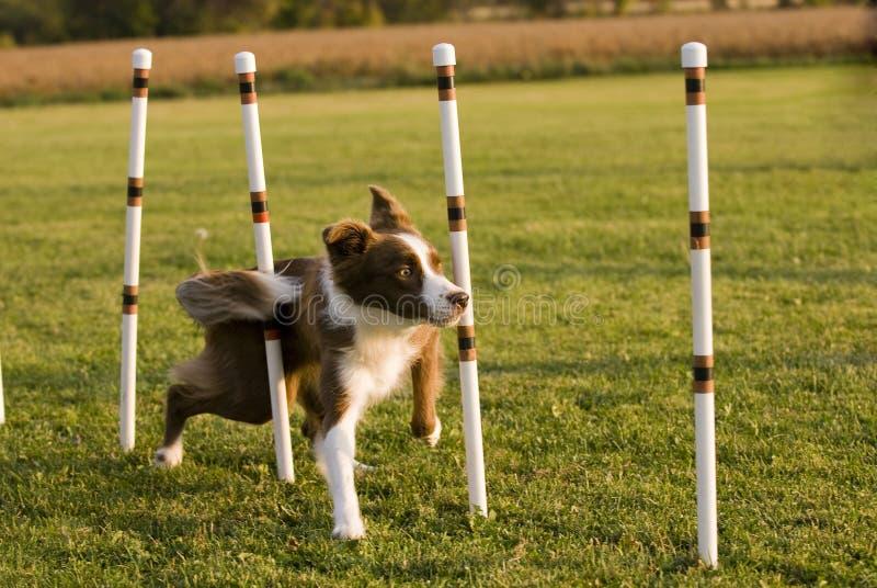 Weave poles stock photo