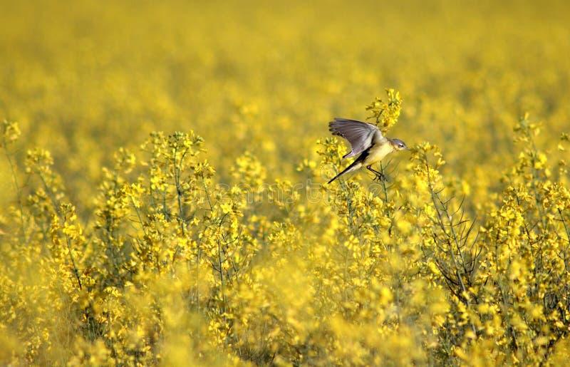 Weaver Bird stock foto