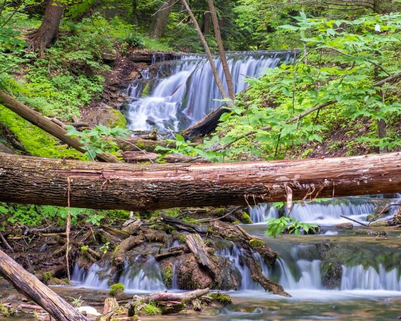 Weaver Creek Falls arkivbild