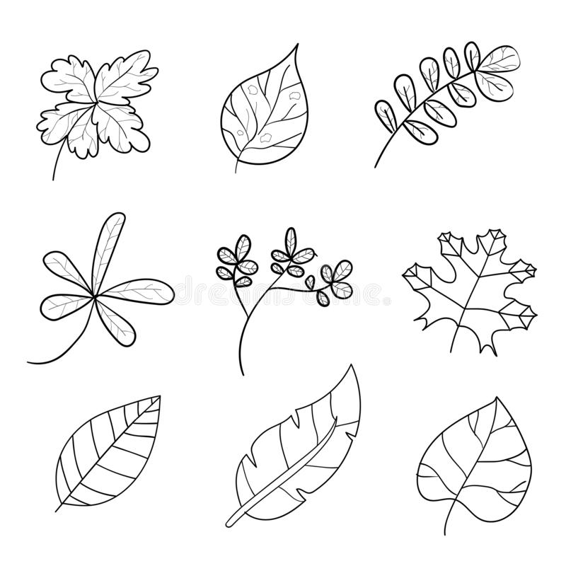 Hand drawn set of vector tropical leave icons. leave hand drawn. On white background vector illustration royalty free illustration
