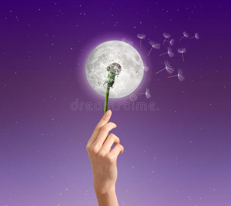Moon flower dandelion abstract dream, wish symbol. Woman hand holding a dandelion, with seeds floating away in the wind, posed in front of the moon, on purple stock image