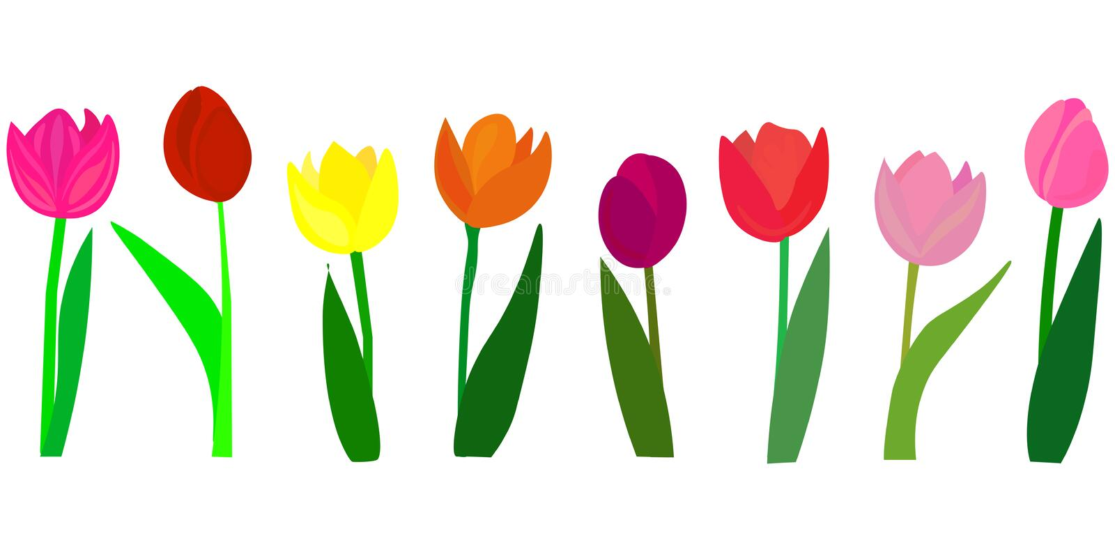 Many beautiful colorful Tulips with leaves isolated on a transparent background. Photo-realistic mesh vector illustration for any royalty free illustration