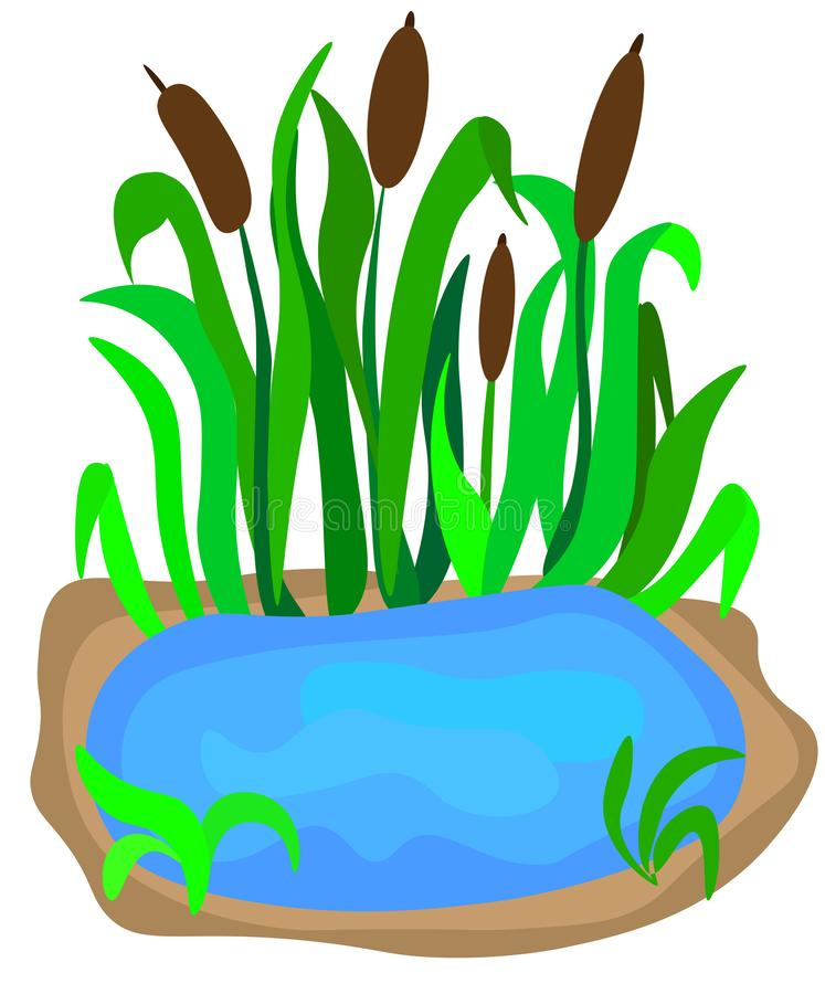 Small lake with reeds on the shore for landscape design isolated on a white background. Cartoon vector close-up illustration. A small lake with reeds on the royalty free illustration
