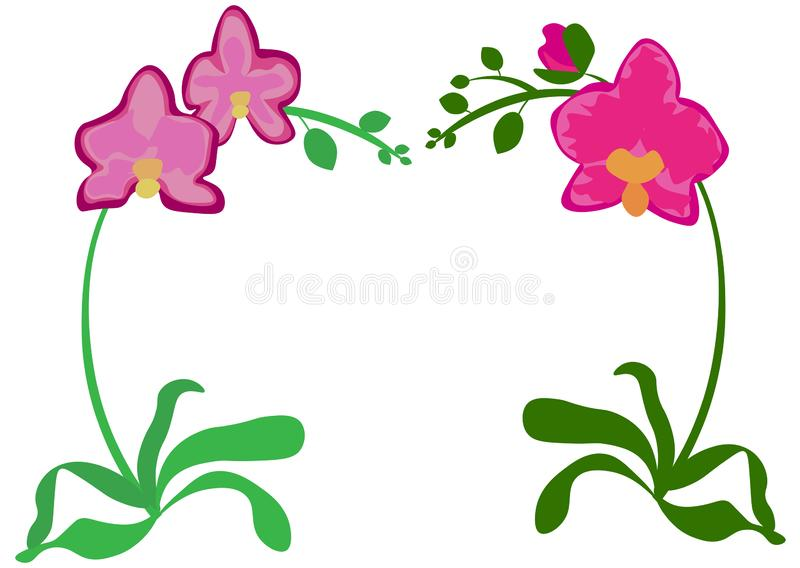 Phalaenopsis orchid pink violet lilac purple orange indoor houseplant. Set of three flowers with buds, green leaves, stem growing stock illustration