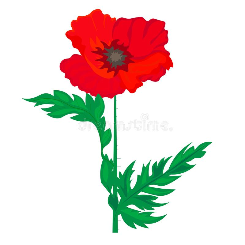 Vector composition with outline red Poppy or Papaver flower, bud and green leaves isolated on white background. Ornate red poppies stock illustration