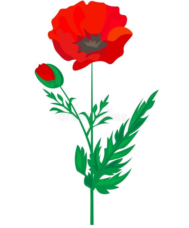 Red Poppy flower isolated on white background, vector illustration, EPS 10 stock illustration