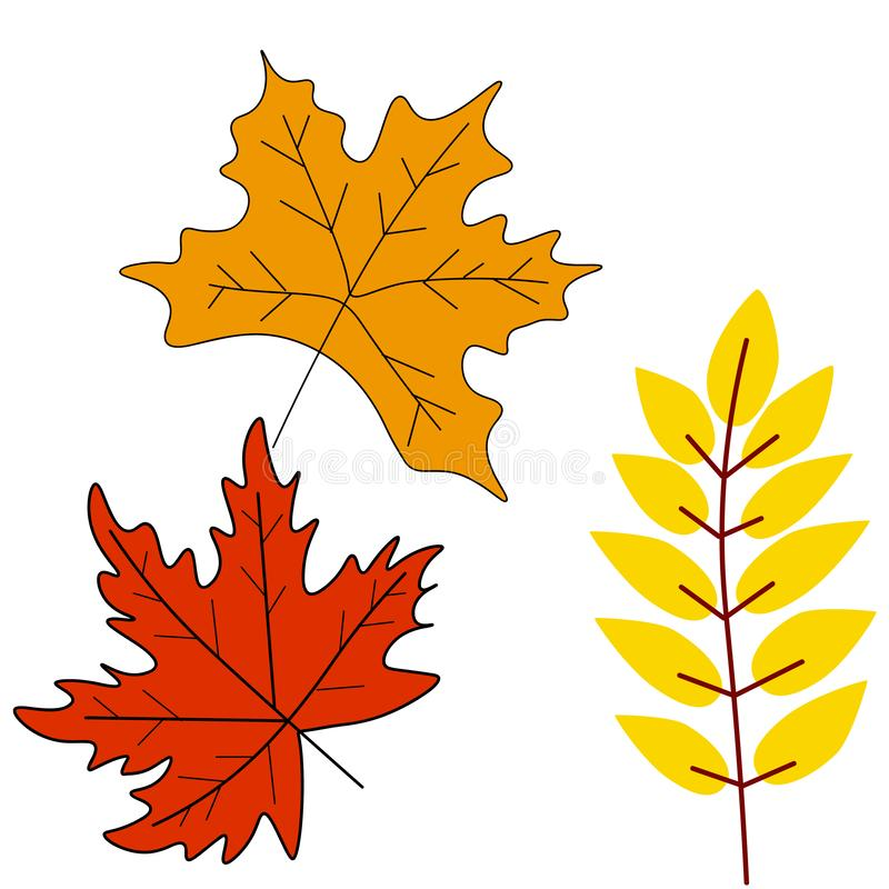 Autumn leaves or fall foliage icons. Vector isolated set of maple, oak or birch and rowan tree leaf. Falling poplar, beech or elm and aspen autumn leaves for royalty free illustration