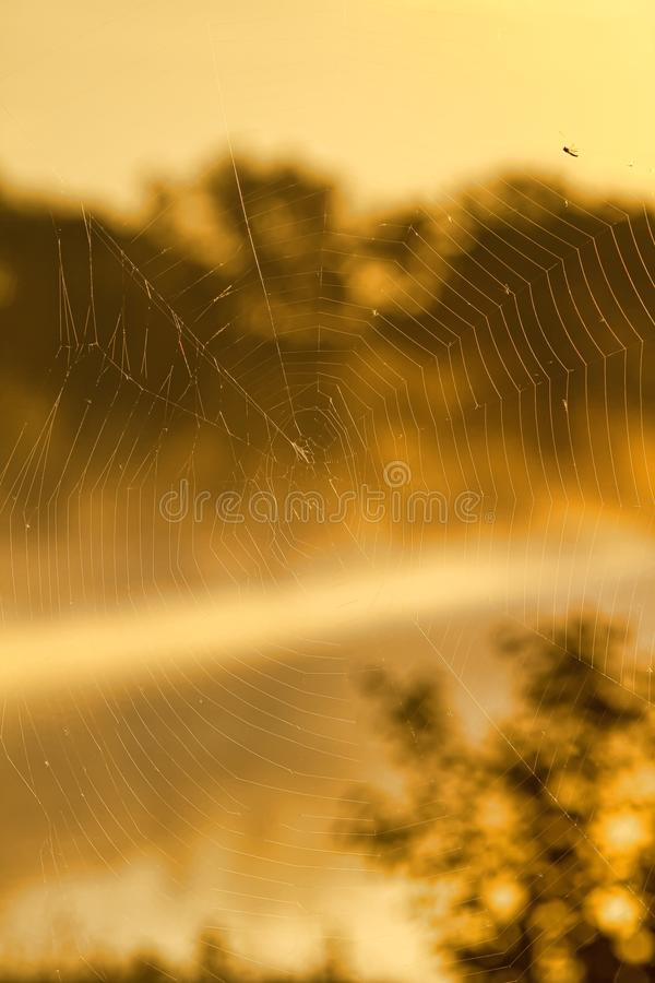 Download Web stock photo. Image of nature, trap, background, curve - 14824138