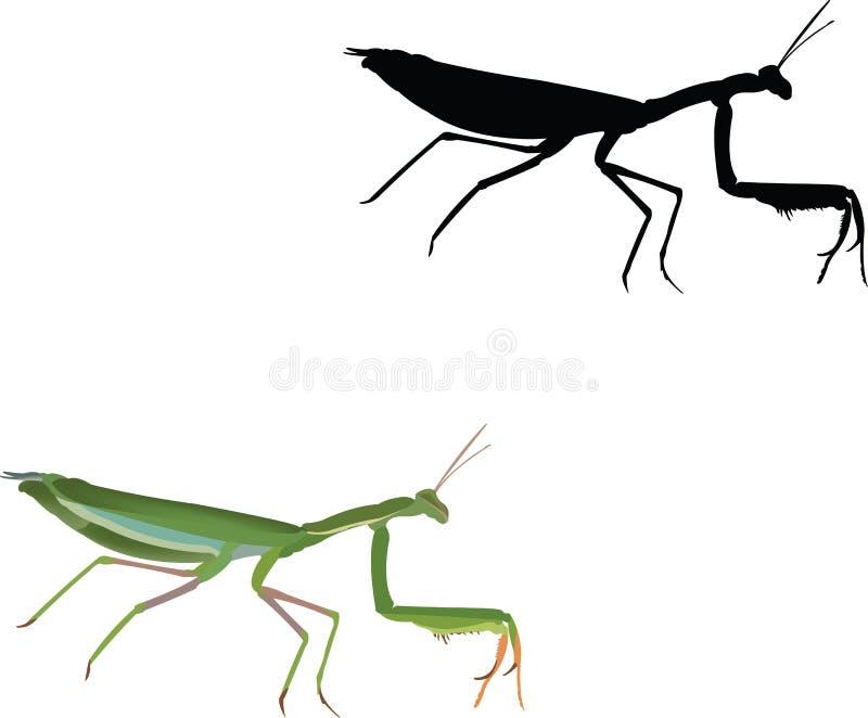 Insect predator invertebrate religious mantis.  vector illustration