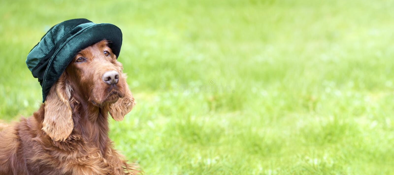 Web banner of a funny dog with green hat royalty free stock photos