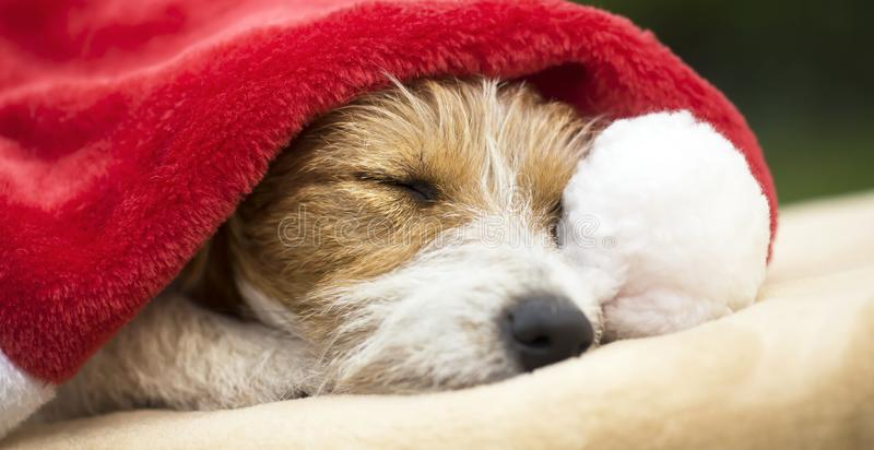Christmas gift pet dog sleeping with Santa hat. Web banner of hristmas gift happy jack russell pet dog puppy sleeping with Santa Claus hat royalty free stock photos