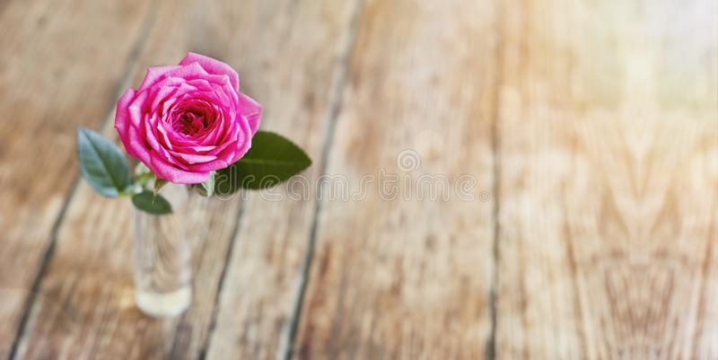 Pink rose banner of life coaching concept. Web banner of pink rose flower on wooden background with blank, copy space - life coaching concept royalty free stock images