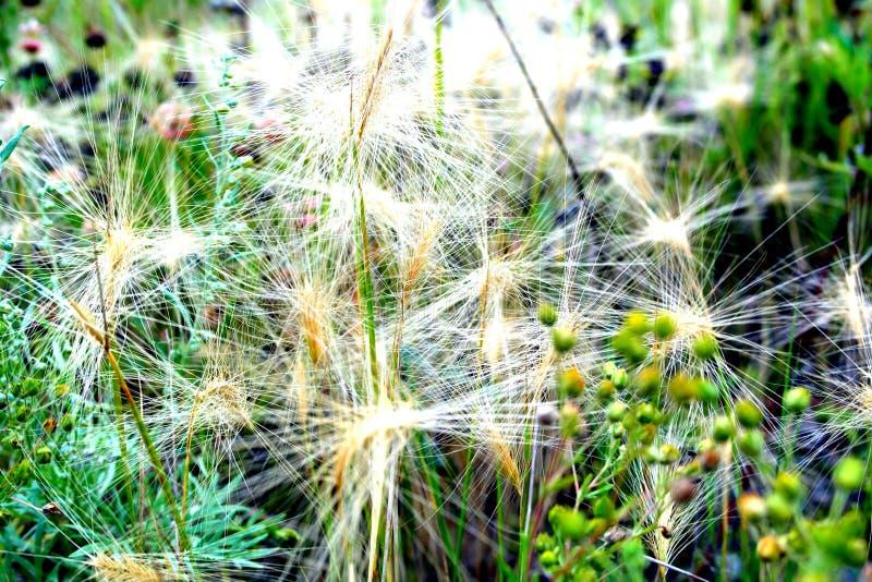 Web branca de ervas da floresta imagens de stock royalty free