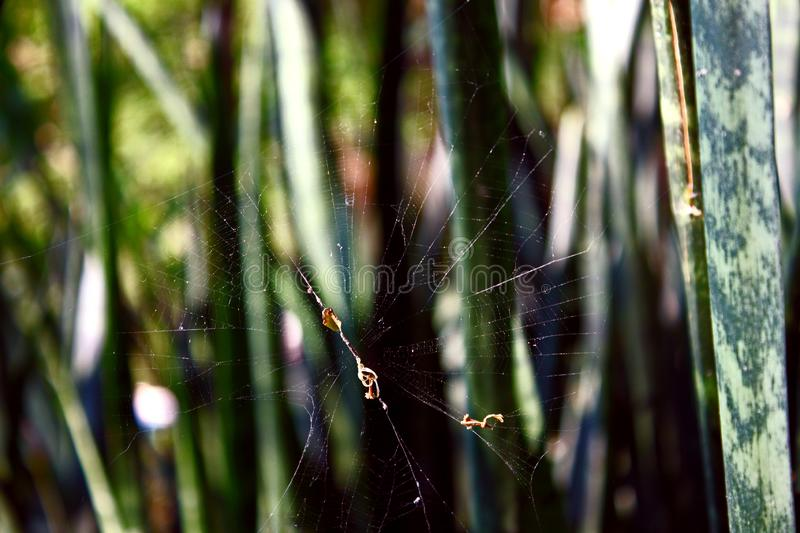Web Close up Stuck between Thin Leaves Natural Background royalty free stock photography