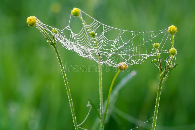 Web con descensos del rocío y de una araña imagenes de archivo
