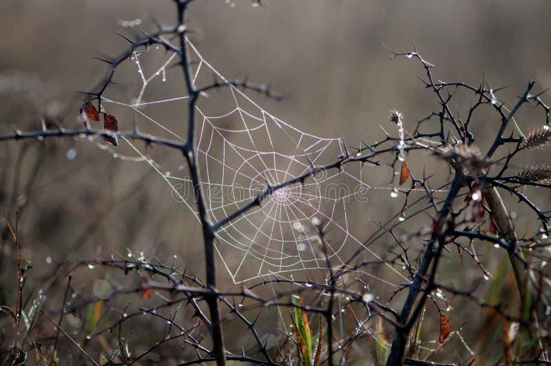 Web d'automne dans les premiers rayons du soleil dans un pré photo libre de droits