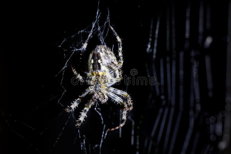 Web da aranha e do ` s da aranha no fundo preto Aracnídeo que escala a Web Imagem macro ascendente próxima do extremo fotografia de stock