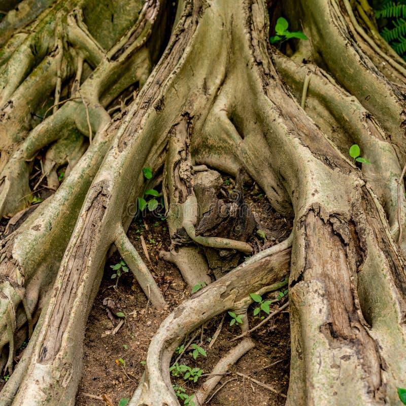 Web da raiz da árvore foto de stock royalty free