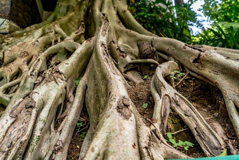 Web da raiz da árvore fotos de stock royalty free