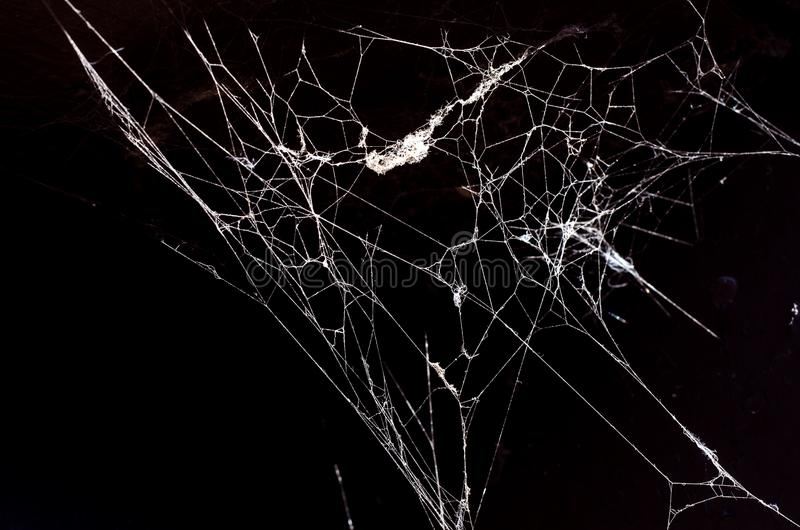 Spider web on a dark background. Web on a dark background, black and white photo is the most popular royalty free stock photo