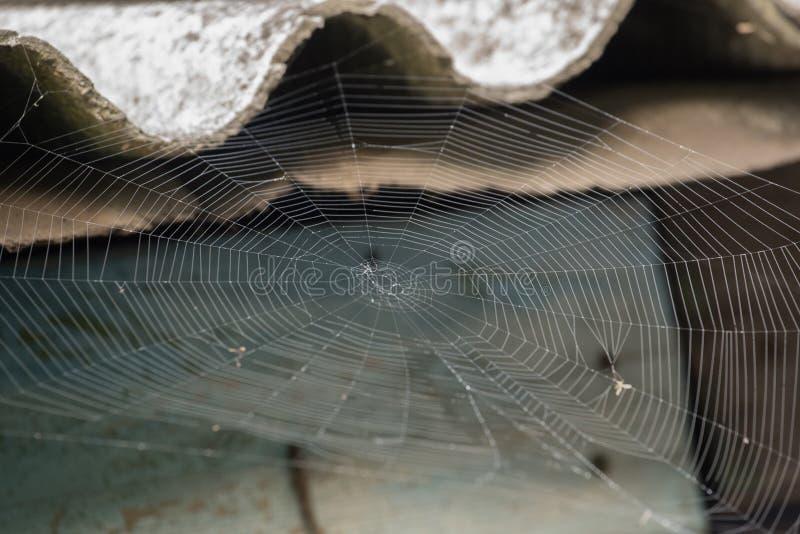 Web de araña blanco grande en rocío por la mañana en un fondo del verano imagenes de archivo